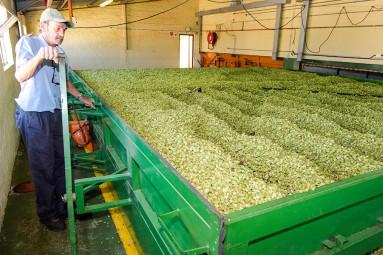 SAB hops farming photos