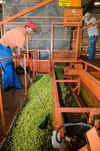 SAB hops farming photos