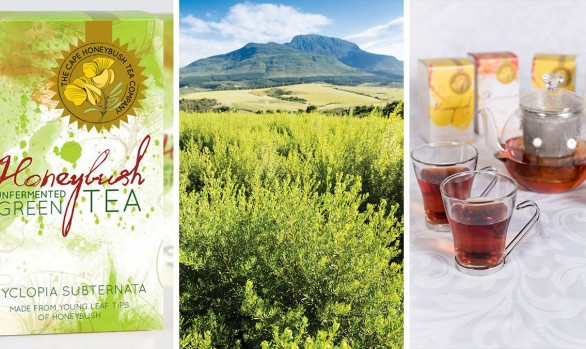 Cape Honeybush Tea