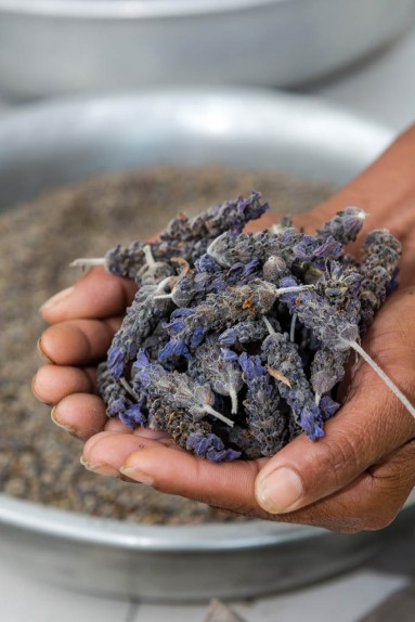 Lavender farming South Africa